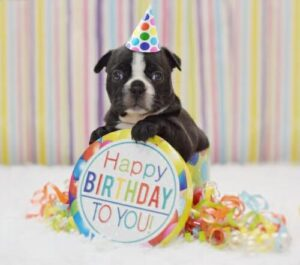 Get a Birthday Celebration Doggy